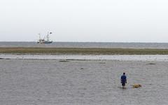 watching the tide, seeking the shrimps (Alta Alteo) Tags: meer nordsee kste stpeterording2013