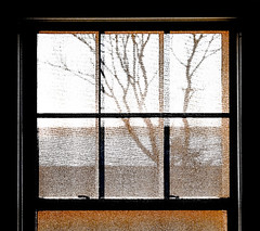 ... (fayebythebay) Tags: tree texture blind filter windowview fayeketola