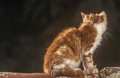 Gato - Cat (Jose Losada Foto) Tags: españa cats nature animals casa calle andalucía nikon jose huelva gatos ciudades lugares campo animales fotografia casas excursión higueradelasierra nikond90 joselosada