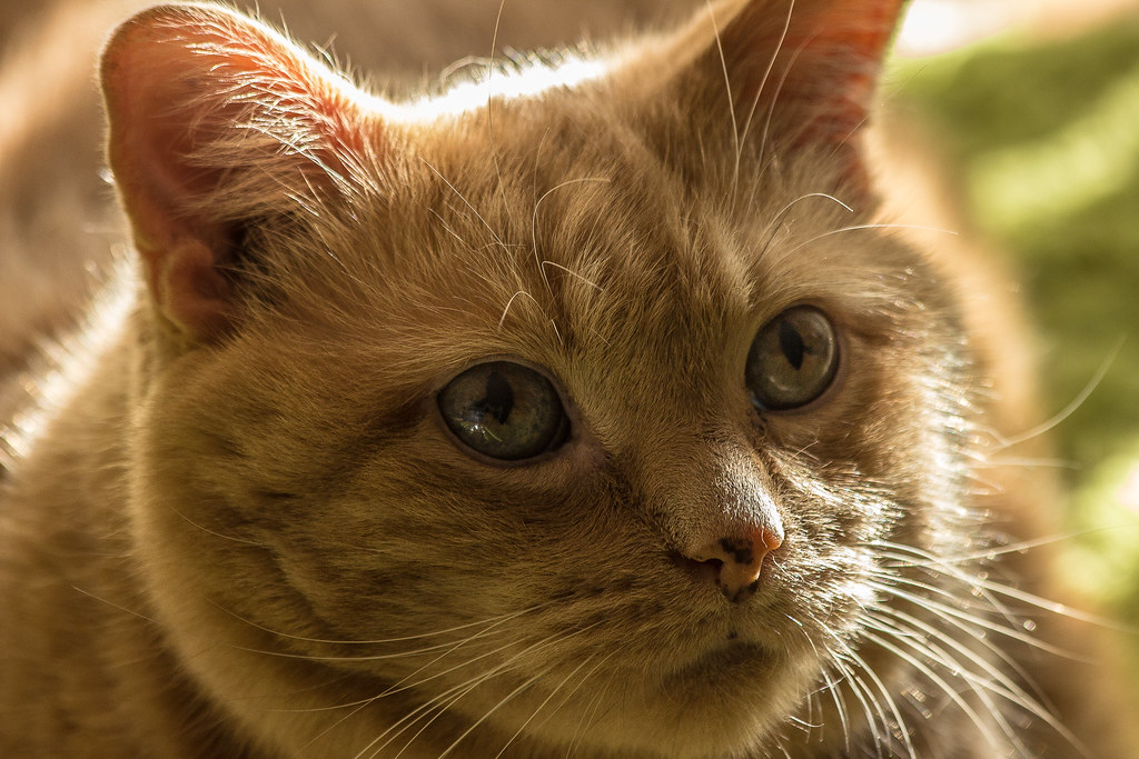 Cat S Meow Ottawa
