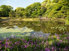 P1560354.jpg (Rambalac) Tags: flowers plant water japan pond asia вода пруд цветы япония растение азия lumixgh4