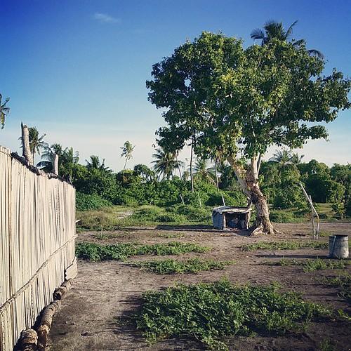 #Karaa #dhandu #agriviyafaari #agriculture #dharanboodhoo