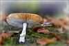 Van ondere (hejos54) Tags: paddestoelen mushroos bos woud tuin herfst canon eos 5d mark iii ef100mm f28l macro is usm