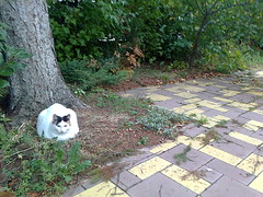 Fotografie13817 (chicore2011) Tags: cat loaf its garden