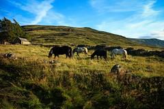 IMG_0422 (LezFoto) Tags: horses mountians horse royaldeeside glenmuick glenmuickestate scotland canon eosm