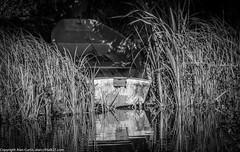 9Q6A6829 (2) (Alinbidford) Tags: alinbidford alancurtis brandonmarsh kingfisher greyheron heron kestrel