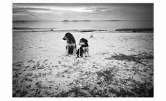 two friends in the sea (partis90) Tags: fujifilm xpro2 carl zeiss distagon t 18mm 40 zm fuji sw schwarzweiss monochrome bw landscape photography