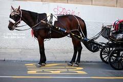 Crisi di identit (marcopa82) Tags: city street travel italy urban horse sicily photography transportation