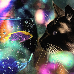 FaceOff (clabudak) Tags: fish cat fishbowl colorful whiskers art