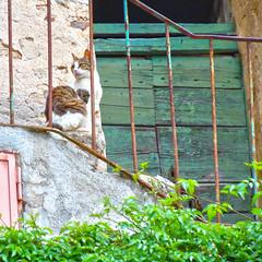 sulla porta di casa (paletta_7) Tags: cat doorstep marciana isoladelba elbaisland tuscany italy