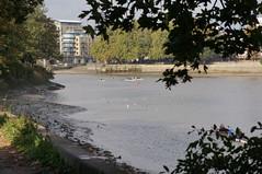DSC09239 (jiving John) Tags: wisy walk riverthames richmond barnes
