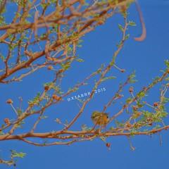#_  #goodmorning  #plant # # # #sonya  #sonyalpha  #2015 #  # # #  # #ksa #saudi #saudiarabia  #saudi_arabia # # # #plants #photo #instaplant #instaplants #_ #hdr #instahdr #repostap (photography AbdullahAlSaeed) Tags:     instaplants  hdr   saudiarabia bw  goodmorning saudi  instahdr  plant  2015 repostapp photo plants sonyalpha sonya ksa   instaplant