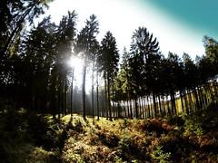 Ein Traumtag geht zuende. Mal sehen wie viele dieses Jahr noch dazu kommen.. #MTB #Mountainbike #stravaphoto #forest #outdoor #outdoorlovers #outsideisfree #sunlight #Fichten #Sauerland #breckerfeld #gopro #latergram (Atomaffe23) Tags: ein traumtag geht zuende mal sehen wie viele dieses jahr noch dazu kommen mtb mountainbike stravaphoto forest outdoor outdoorlovers outsideisfree sunlight fichten sauerland breckerfeld gopro latergram