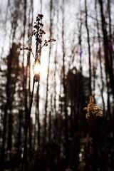 It's time to begin, isn't it? (A.Ciepielewska) Tags: outdoor walktime polska poland fx fullframe 50mm shadow światłocień light lighting shine gloss bright nature natura polishphoto polishgirl lubelskie trees drzewa autumn jesień las forest światło słońce sun sunshine
