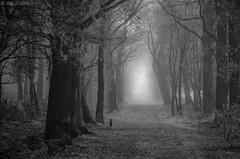 Mysterious morning (Wim Scholte) Tags: fryslân katlijkerschar netherlands nikon wimscholte