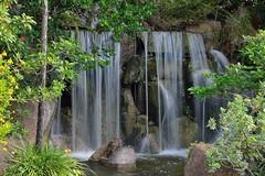 Morikami Falls (ACEZandEIGHTZ) Tags: morikami museum japanese gardens nikon d3200 waterfall topshots peacemakers onlythebestofflickr natureselegantshots cascade