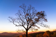 The guardian of Thornton Hollow, Shenandoah National Park (Vladimir Grablev) Tags: autumn overlook romantic dawn blocks fall early red morning contrast tree scenic sky wall yellow valley view sunrise nationalpark store sun shenandoah colorful curb beautiful bright downtown virginia skylinedrive nature orange foreground seasonfoliage saturated background luray unitedstates us
