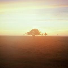 Stora Alvaret - Velvia 100 exp* (magnus.joensson) Tags: sweden swedish land island sunrise alvaret hasselblad 500cm zeiss planar 100mm cf fuji velvia 100 exp exp2007 e6 6x6