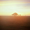 Stora Alvaret - Velvia 100 exp* (magnus.joensson) Tags: sweden swedish öland island sunrise alvaret hasselblad 500cm zeiss planar 100mm cf fuji velvia 100 exp exp2007 e6 6x6