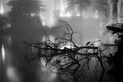 On the Nile (jpaulus) Tags: bird night water pillars sanfrancisco palaceoffinearts tree fog