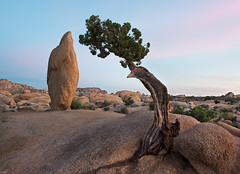 Two (tsaiproject) Tags: nikond800e nikon2470mm joshuatreenationalpark california junipertree balancedrock mojavedesert sunset inselbergs u2