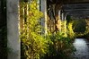 Hampstead Heath Pergola (Suzanne Hamilton) Tags: autumn hampsteadheath pergola