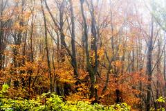 11112016-DSC_0048.tif (vidjanma) Tags: automne arbres brume couleurs