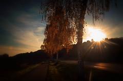 Holding their leaves (dannicamra) Tags: nikon d5100 germany bavaria bayern regenstauf landscape sun street tree leaves autumn sunrays nature sunset landschaft strase natur baum sonne laub herbst