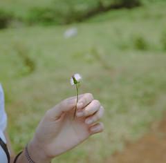 Dandelion (ramos.edgardo19@ymail.com) Tags: sonyalpha sigma30mmf28 sigma mttalamitam dandelion wish