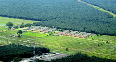 One last shot of the lush green plantations (oobwoodman) Tags: malaysia malaisie malaysien aerial aerien luftaufnahme luftphoto luftbild palms palmen palmtrees palmiers palmoil plantation plantage amskul