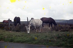 img070 (foundin_a_attic) Tags: 1964 cornwall horse pony green grass mores fence barbed wire