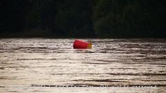 Torino (32) (cattazen.com) Tags: alluvione torino po esondazione parcodelvalentino murazzi pienadelpo cittditorino turin piemonte