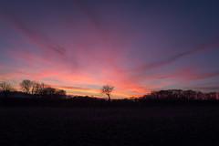 November Sunsets (Adam_Marshall) Tags: autumn trees england sunset sky nature cambridgeshire stereocolours outdoors landscape adam marshall field countryside clouds adammarshall fall canon eos70d sigma 1750mmf28 silhouette pink orange dark winter