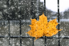 Hello December! (zaher.ziadeh) Tags: december dicembre decembre leaves leav snow white nature natale noël christmas mulhouse yellow