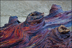 Logged Layers (The Surveyor) Tags: ocean city macro beach oregon coast log pacific or lincoln layers redwood blinkagain