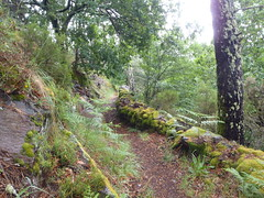 From Candal to Catarredor (rgrant_97) Tags: verde green portugal forest walking serra floresta coimbra lous caminhadas candal catarredor