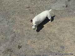 Morgana with ball in Wainfleet Quarry May 20, 2013 (Wolfmaan) Tags: camping ontario canada outdoors jrt rocks hiking barefoot barfuss wainfleet