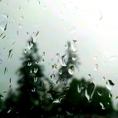 Rain I. (Dena Rosko) Tags: sky tree window rain weather landscape washington pacificnorthwest renton treehugger streamzoo