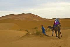 Riders in the sand (Byrd on a Wire) Tags: sahara dunes morocco camels sanddunes camelriders
