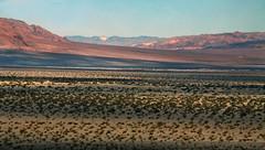 Valley Stripes (lefeber) Tags: california mountains landscape haze shadows desert whitemountains roadtrip brush valley plus deathvalley hazy bushes atmosphericperspective aerialperspective