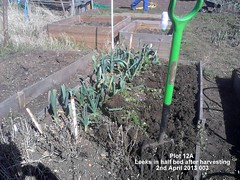 Plot 12A - Leeks in half bed after harvesting 02-04-2013 003 (Davy1000) Tags: carrots leeks broadbeans onionsets earlypotatoes april2013 plot12a lettucelittlegem halfbed beetrootchioggia potatoesrocket