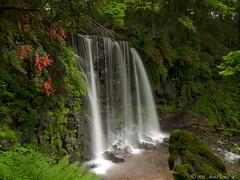 G o o d T i m e s B a d T i m e s (AnthonyGinmanPhotography) Tags: flowers green japan waterfall moss zeppelin led ueda naganoprefecture sugadaira leefilters olympuse620 olympus1122mmf28