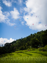 Paragliders (whitworth images) Tags: blue trees nepal sky white green nature sport clouds outdoors flying dangerous asia southeastasia village rice paddy terrace hill grain harvest crop colourful paragliding lush agriculture pokhara adrenaline agricultural paragliders parachute paddies sarangkot kaski