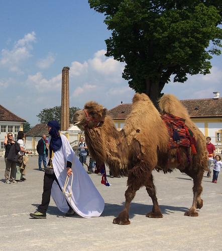 Schlosshof: Barocker Tierumzug und Tanz um den Maibaum