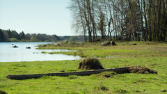 At the River (Nyllet) Tags: water grass sunshine forest river landscape log grove helios408515