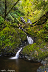 Whichever Way Falls (Jared Ropelato) Tags: california statepark fern green nature water northerncalifornia creek forest river outdoors photography waterfall moss spring stream natural hike trail coastal photograph mttam recreation tamalpais cataract 2015 mouttam jaredropelato ropelatophotography