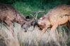 "Sambar Deer <a style=""margin-left:10px; font-size:0.8em;"" href=""http://www.flickr.com/photos/41134504@N00/17157374966/"" target=""_blank"">@flickr</a>"