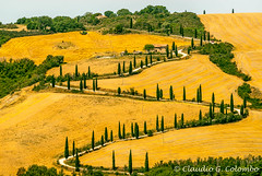 Landscape in Val d'Orcia (Tuscany) (clodio61) Tags: road summer italy panorama plant color tree green nature yellow horizontal farmhouse landscape photography countryside europe day view natural outdoor farm country hill meadows culture panoramic tuscany fields cypress winding siena agriculture castelluccio orcia foce sarteano