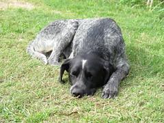 """Pépé, un des chiens de la maison et le meilleur ami de Manu <a style=""""margin-left:10px; font-size:0.8em;"""" href=""""http://www.flickr.com/photos/83080376@N03/17384811464/"""" target=""""_blank"""">@flickr</a>"""