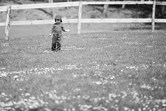 meadow (dziurek) Tags: life boy summer portrait people baby sun sunlight white plant black flower color cute male green nature beautiful beauty smile field grass hat childhood yellow fence garden fun happy person one blackwhite kid spring funny day village child play little outdoor walk background country joy lawn young meadow happiness dandelion health human cap blond daisy years cheerful